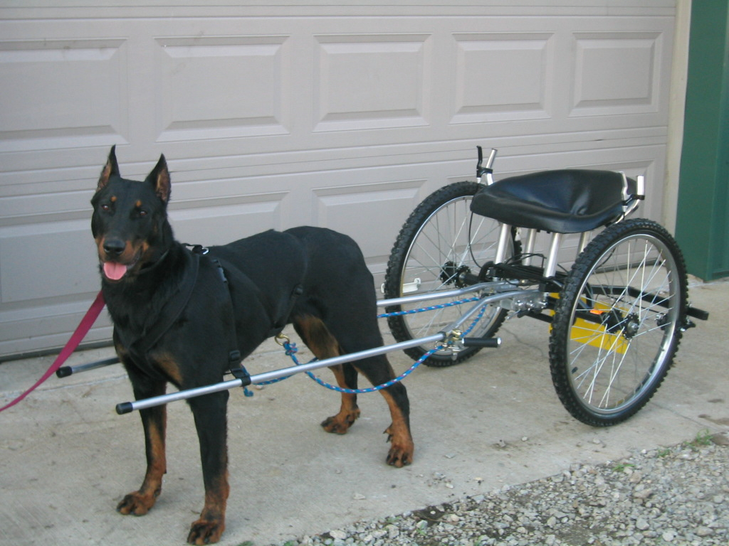 Videos Of Dogs Pulling Carts